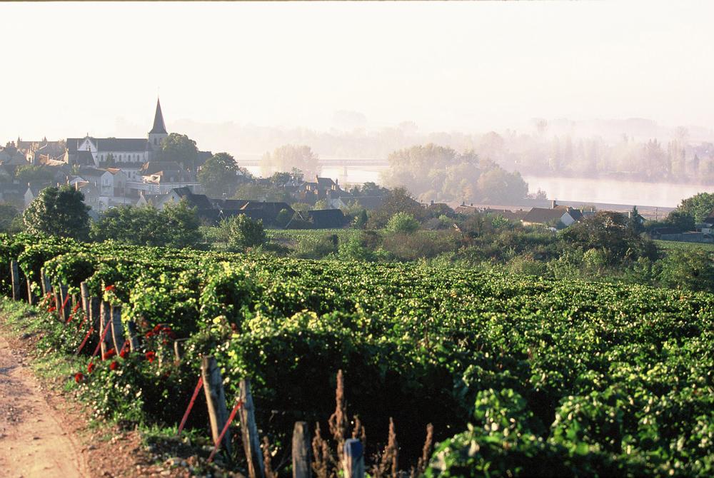 Le vignoble de Pouilly-sur-Loire