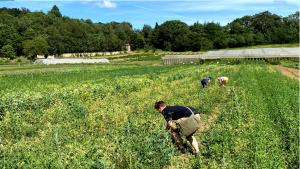 Cueillette aux Jardins de Marigny à Sauvigny-les bois