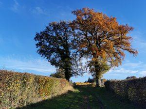 Les couleurs d'automne dans la Nièvre - Florence Bourry